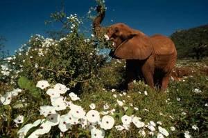 elephant-flowers-615